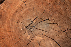 Wood grain texture of old tree stump with cracks in brown tone f Royalty Free Stock Photos