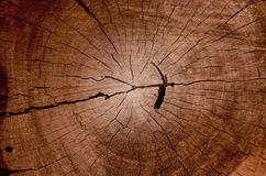 Wood grain texture of old tree stump with cracks in brown tone f Royalty Free Stock Photography
