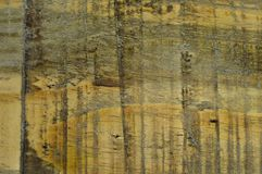 Wood pine texture. Grain, cover. Wood grain texture. Pine wood, can be used as background royalty free stock photos