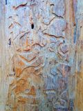 Wood grains texture Royalty Free Stock Photo