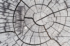 Wood graphic Texture Stock Photography