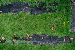 Wood and grass. Image from outdoor background series (wood and grass Royalty Free Stock Photography