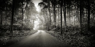 Into the wood in grayscale Stock Photos