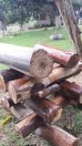 Wood Green Stock Photos
