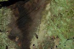 Wood. Green lichen on a wood surface Stock Photography