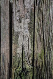 Wood with green moss (texture background - wood texture) Stock Photo