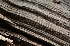 Wood grooves. Grooves formed in a fallen tree in the forest form a diagonal pattern and very rough texture Stock Images