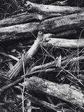 Wood on the ground Stock Photo