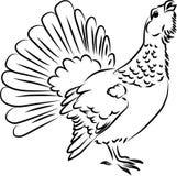 Wood grouse royaltyfri illustrationer
