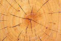 Wood with growth ring Royalty Free Stock Photo