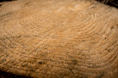 Wood growth rings Stock Photo