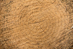 Wood growth rings Royalty Free Stock Image
