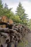 Wood hög Fotografering för Bildbyråer