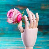 Rose in wooden hand on turquoise background Royalty Free Stock Image