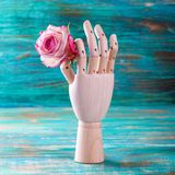 Rose in wooden hand on turquoise background Stock Photography