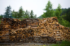Wood harvested for the fire Royalty Free Stock Photos