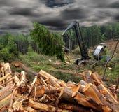 WOod harvesting Stock Image