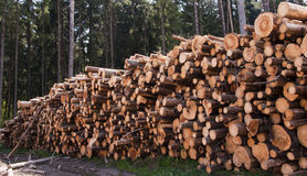 Wood harvesting Royalty Free Stock Photo