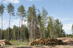 Wood harvesting Royalty Free Stock Photography