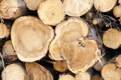 Wood harvesting Stock Photos