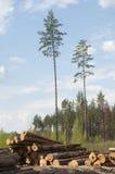 Wood harvesting Stock Photography