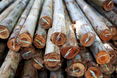 Wood have many logs that cut from big tree and small tree Stock Photography