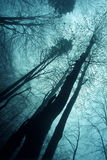 Wood in haze. Trees in blue haze Royalty Free Stock Images