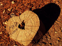 Wood heart Stock Images
