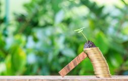 Wood helped coin. Royalty Free Stock Photo
