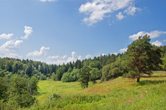 Wood on a hill. Dense wood on the hill covered with a grass with a pine in the foreground stock images