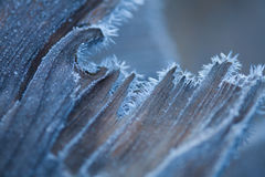 Wood in hoarfrost Royalty Free Stock Photos