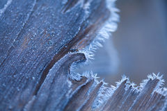Wood in hoarfrost Stock Photo