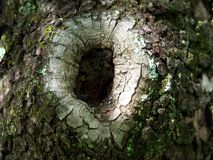 Wood in Hole Stock Photo