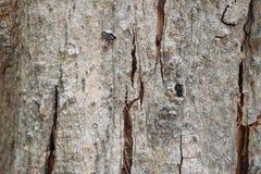 Wood hudtextur med den lilla spindeln Royaltyfri Fotografi