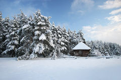 Wood hus i den felika skogen för snö, Lettland Arkivfoto