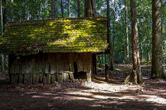 Wood hut dilapidated in jungle. And light sun at National park in countryside of Thailand Royalty Free Stock Photos