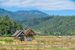 Wood hut in rice field countryside Royalty Free Stock Photos