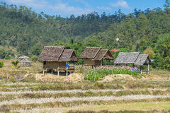 Wood hut in rice field countryside Royalty Free Stock Image
