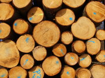 Wood industry. In german forests Royalty Free Stock Photo