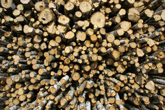 Wood industry. Huge quantities of raw timber Stock Photography