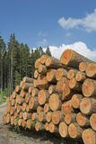 Wood industry in Germany Royalty Free Stock Image