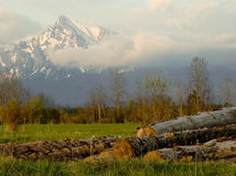 Wood industry under Krivan. Cut trees under Krivan (peak, symbol of Slovakia) in evening sunset light Stock Images