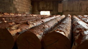 Wood industry. View of raw logs, close-up stock footage