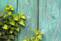 Wood and ivy Royalty Free Stock Photography