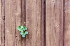 Wood, Ivy, Wood Fence, Paling Royalty Free Stock Photo