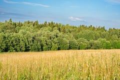 Wood jordbruk Arkivbilder