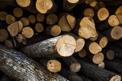 Wood journal med solsken Fotografering för Bildbyråer