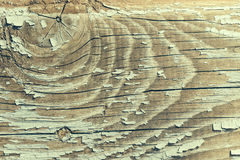 Wood knot in horizontal section Stock Photo