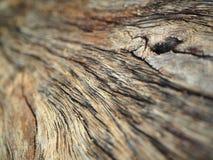 Wood konst Royaltyfria Foton
