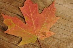 Wood korn med lönnlövet Royaltyfria Bilder